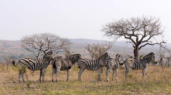 【2021年】南アフリカランドの価値はどうなる?